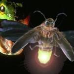 La serpiente y la luciérnaga – Obra de teatro
